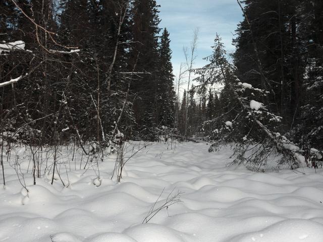 Заснеженное болото