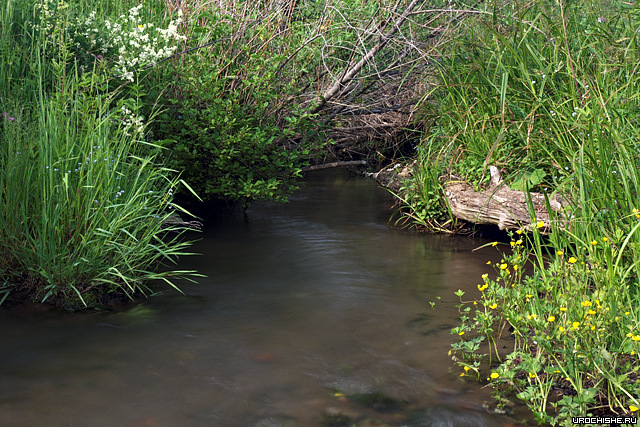 Хариусная речка