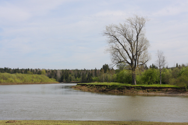 Ловля плотвы на реке весной- место