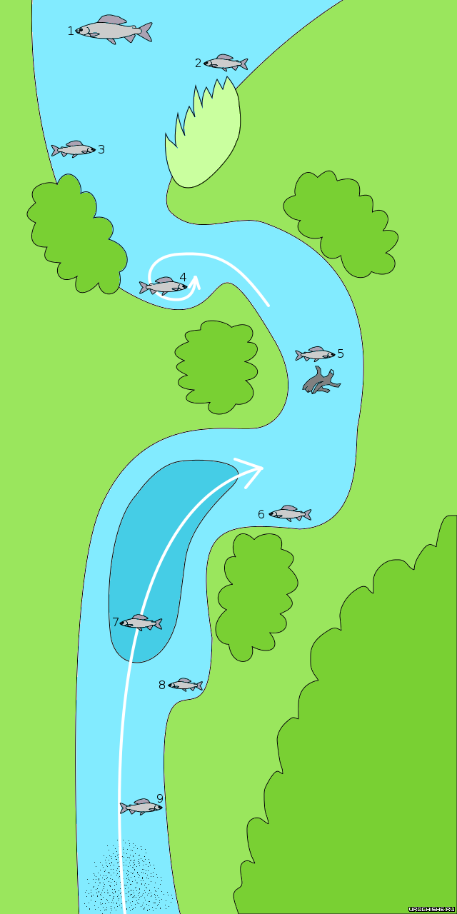 Ловля хариуса на малых реках- карта стоянок рыбы