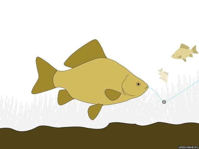 Как клюёт карась- приманка во рту у рыбы