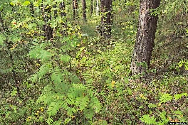 Лес в экологически неблагополучной зоне