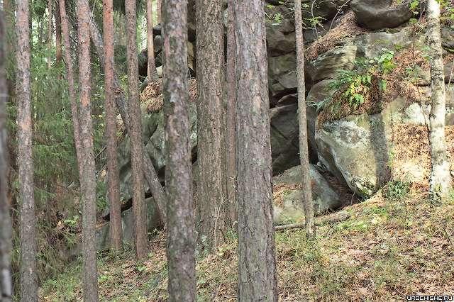 Грибное место- сосняк близ скального выхода