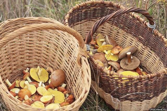 Когда растут грибы