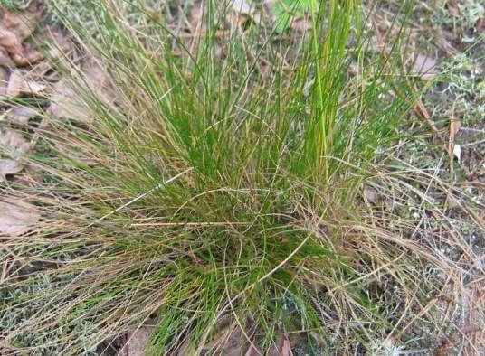 Где растут белые грибы: травяная кочка- спутник белого гриба