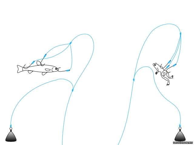 закидушка на голавля- как насадить живца и лягушку