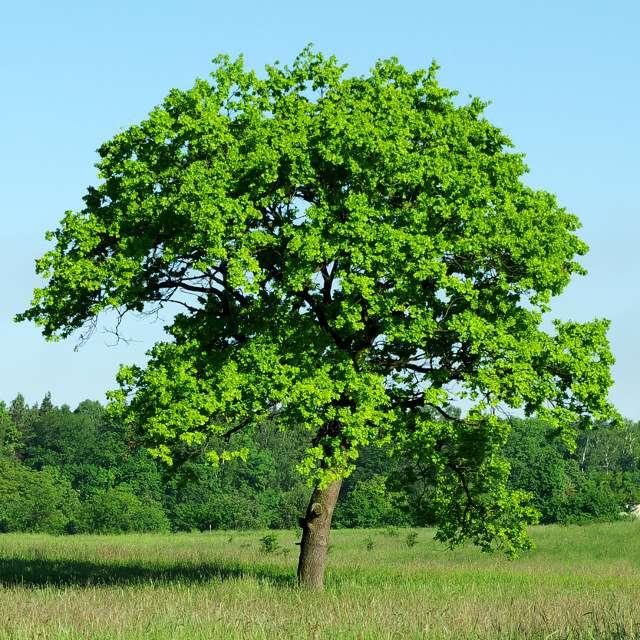 дрова для костра: дуб