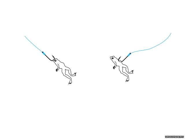 способы насаживания лягушки при ловле налима
