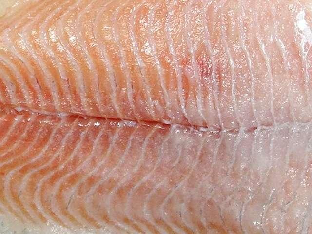 рыбье мясо- насадка для налима