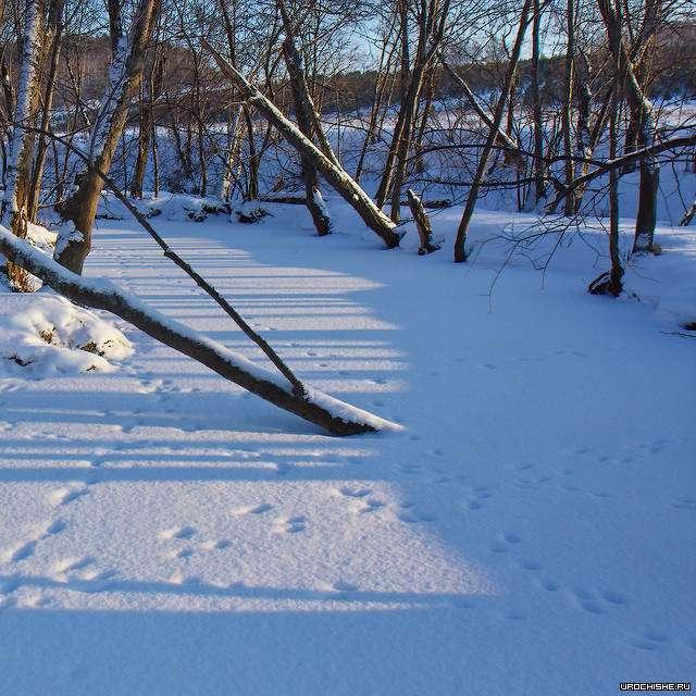ловля хариуса зимой