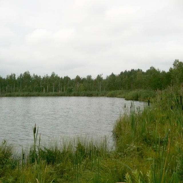 Черновское