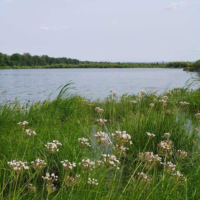 озеро Ольховое