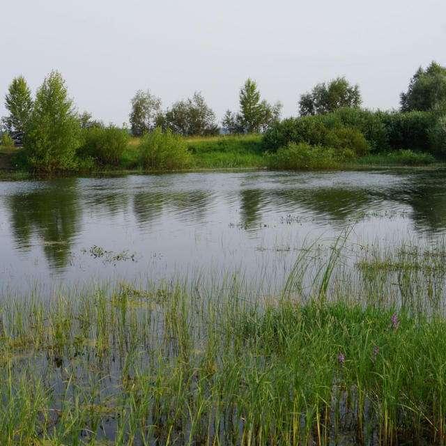 озеро Сосновое